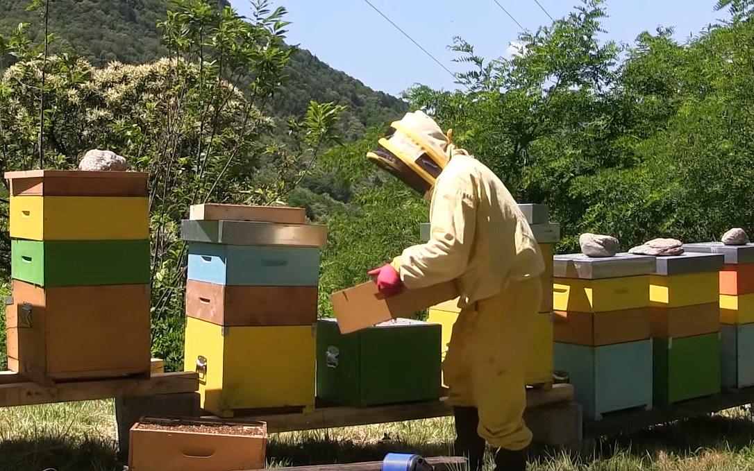 arnie miele ronchello apicultore